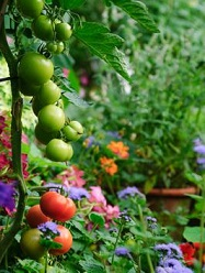 Build an Edible Garden