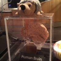 Phil with a real human brain