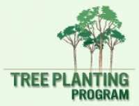 Long Beach Tree Planting Program