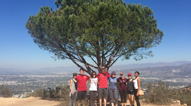 Social: Hiking to the Wisdom Tree!