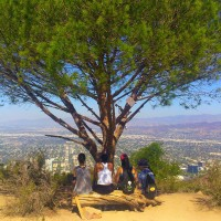 Resting at the Wisdom Tree!